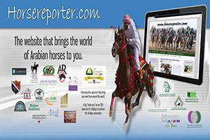 Horsereporter