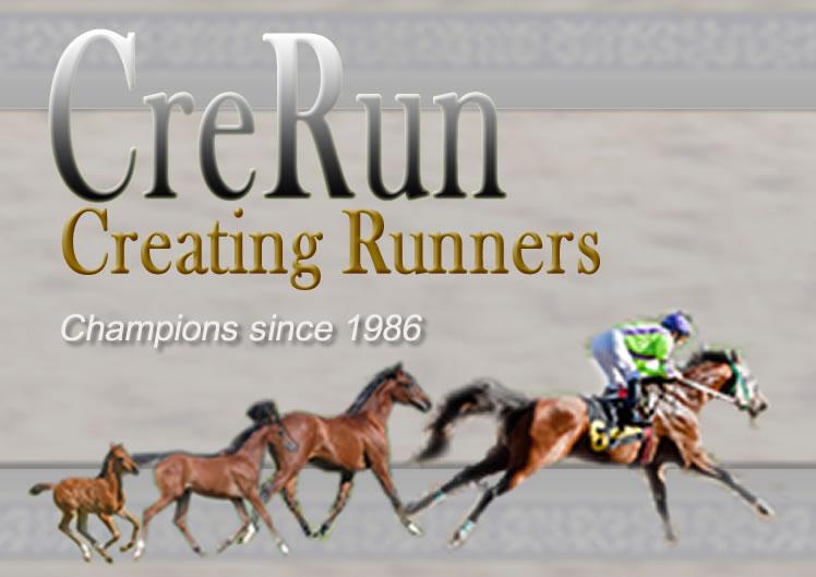 CreRun Arabians