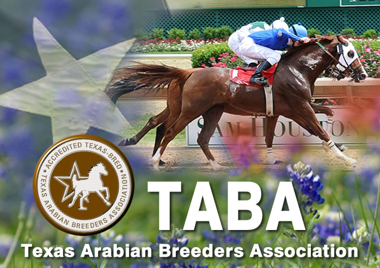 Texas Arabian Breeders Associatiom